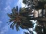 Potatura palma prima