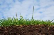 Servizi Agricoli e di Giardinaggio